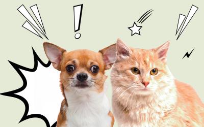 Vuurwerkangst bij honden en katten