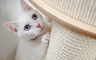 Welke krabpaal past bij jouw kat?