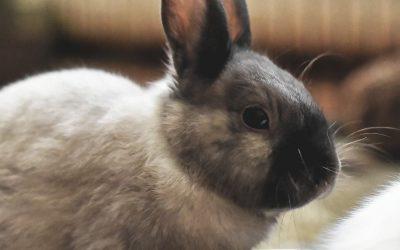 Bescherm jouw konijn tegen konijnenziekten