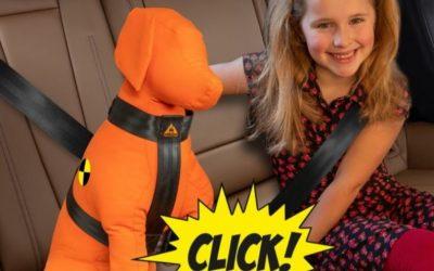 Je hond veilig vervoeren in de auto