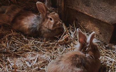 Jouw konijn of knaagdier beschermen tegen kou