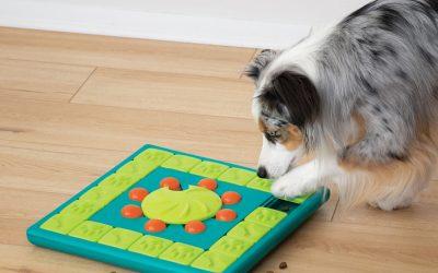 Daag jouw hond uit met hersenwerk!