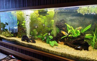 Algen in je aquarium? Doe de aquariumcheck!