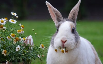 Het gebit van een konijn of knaagdier verzorgen