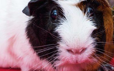 Beaphar Care+ voeding voor konijnen en knaagdieren