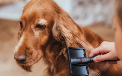 Vachtverzorging van de hond: voorkom problemen