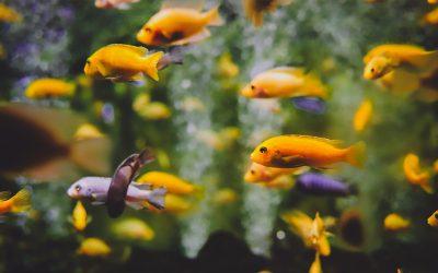Visziekten in het aquarium herkennen en bestrijden