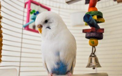 Houd je vogel fit en gezond met deze tips