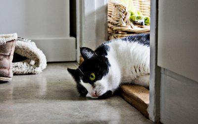 Oververhitting bij de kat: voorkomen, herkennen en handelen
