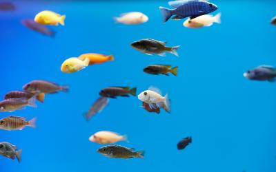 Water van het aquarium verversen