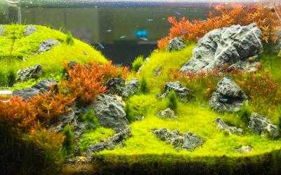 De bodem van het aquarium inrichten