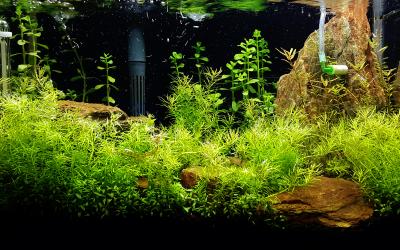 Plantjes planten in het aquarium