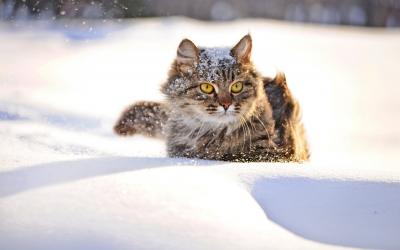 Wintertips voor buitenkatten: veilig de winter door!