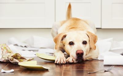 Tips voor hondenbaasjes na de lockdown